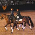 Pferd_walmorel_g01