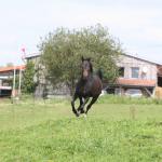 Pferd_walmorel_g04